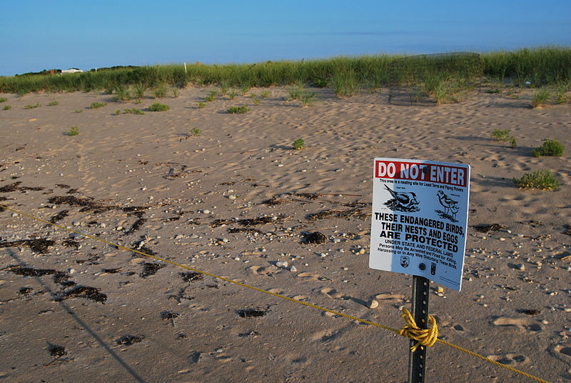 piping plover fencing